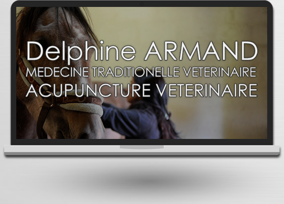 Acupuncture Veterinaire à Figeac